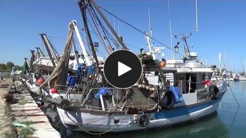 Embedded thumbnail for L'etichettatura dei prodotti della pesca e dei molluschi